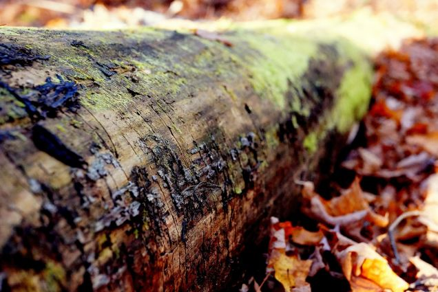 10,000 (Rough Count) Ways To Remove Pine Tree Sap From Everything