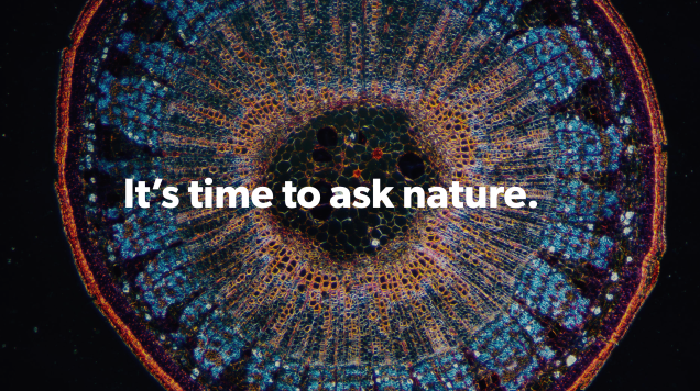 Finds Nature's Solutions to Your Problems With This Website